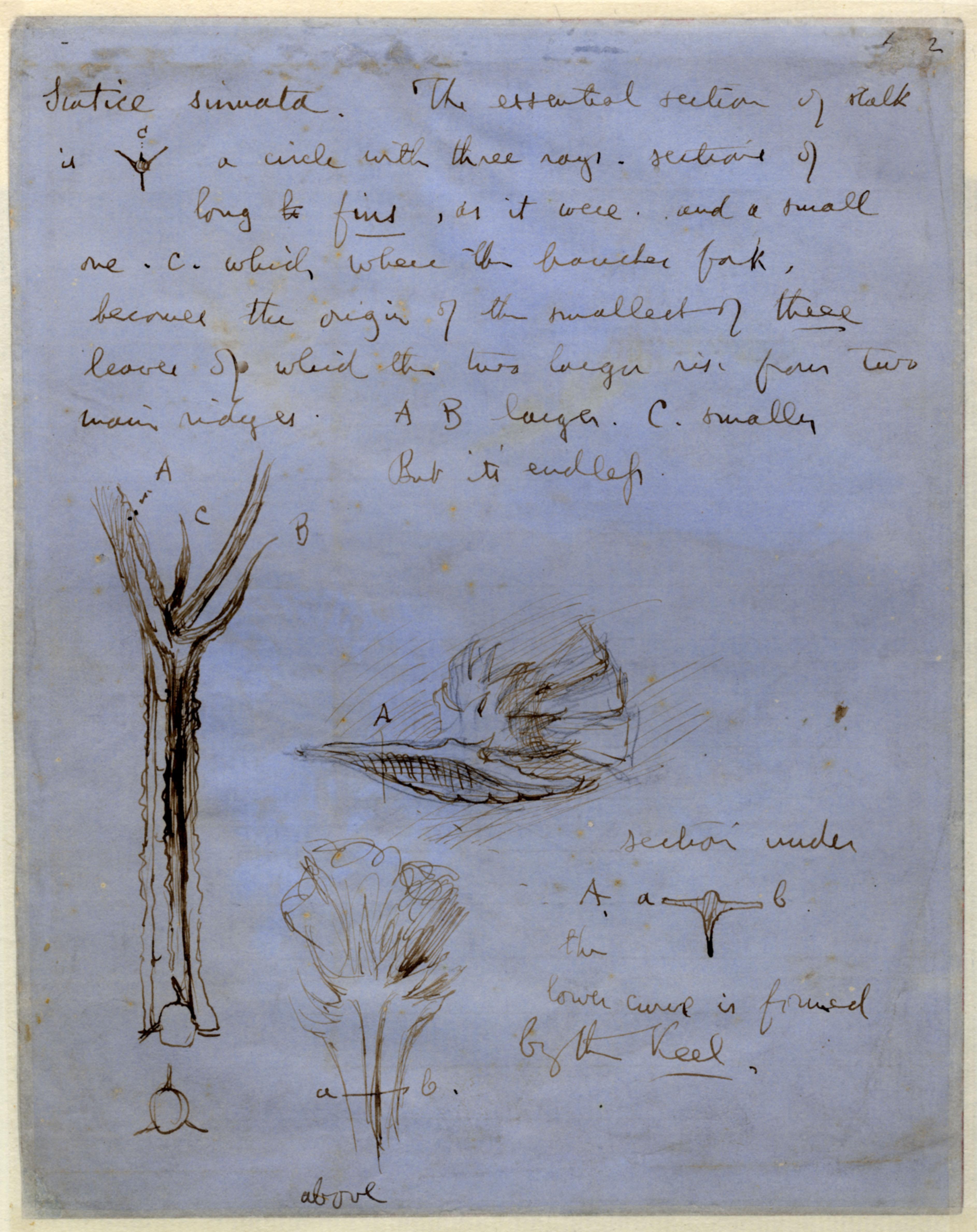 John Ruskin, Verso - Bluebell, RF1186v © Ruskin Foundation