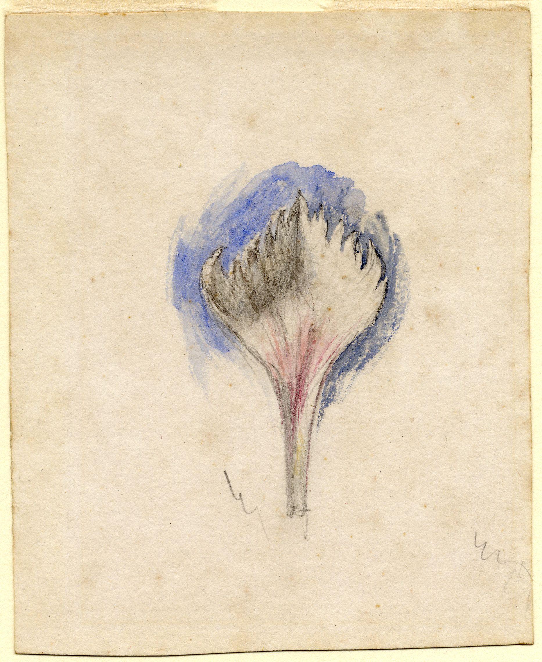 John Ruskin, Flower Study - bud, RF1262,  © Ruskin Foundation