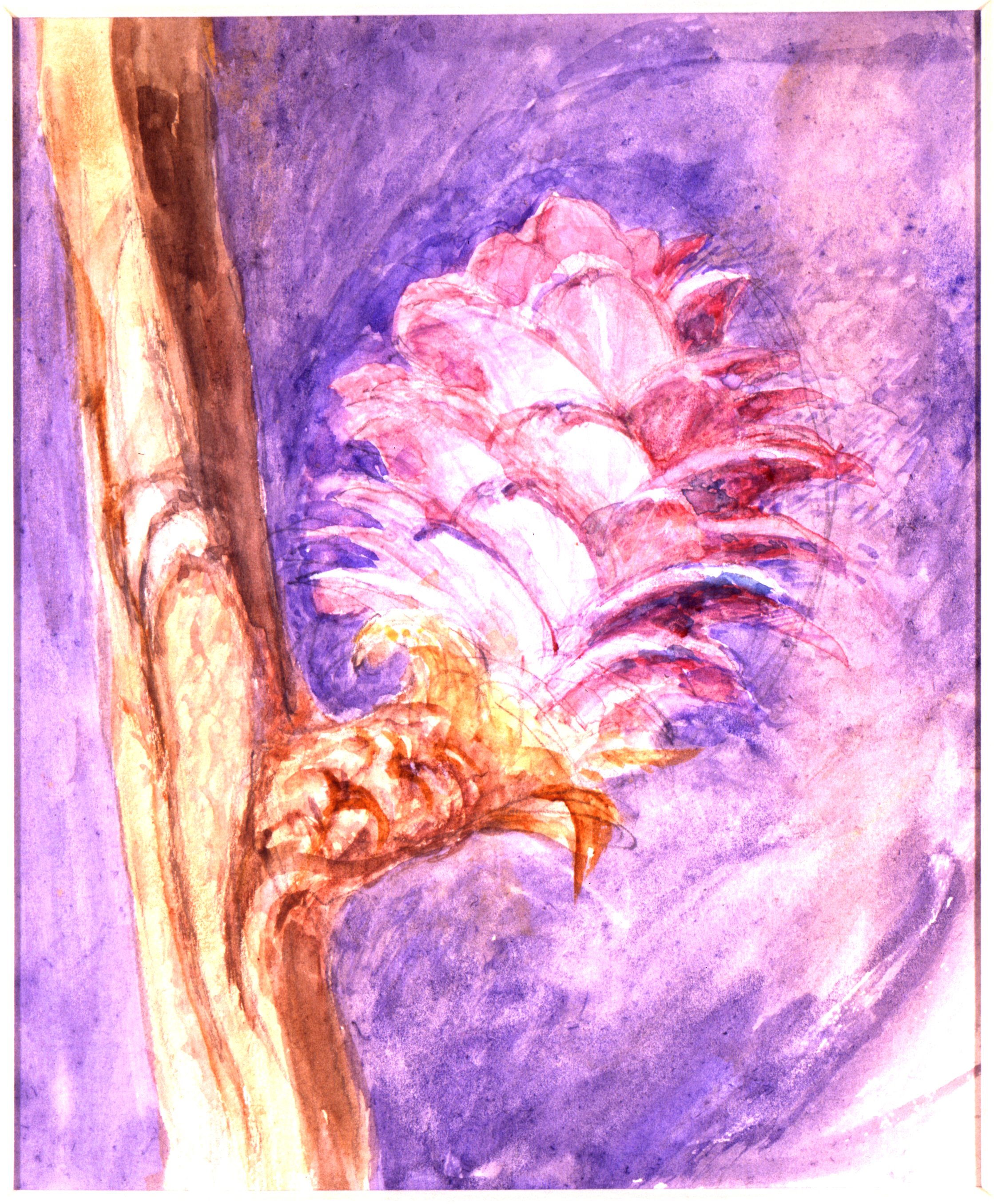 John Ruskin, Flower studies: larch rose, RF1264,  © Ruskin Foundation