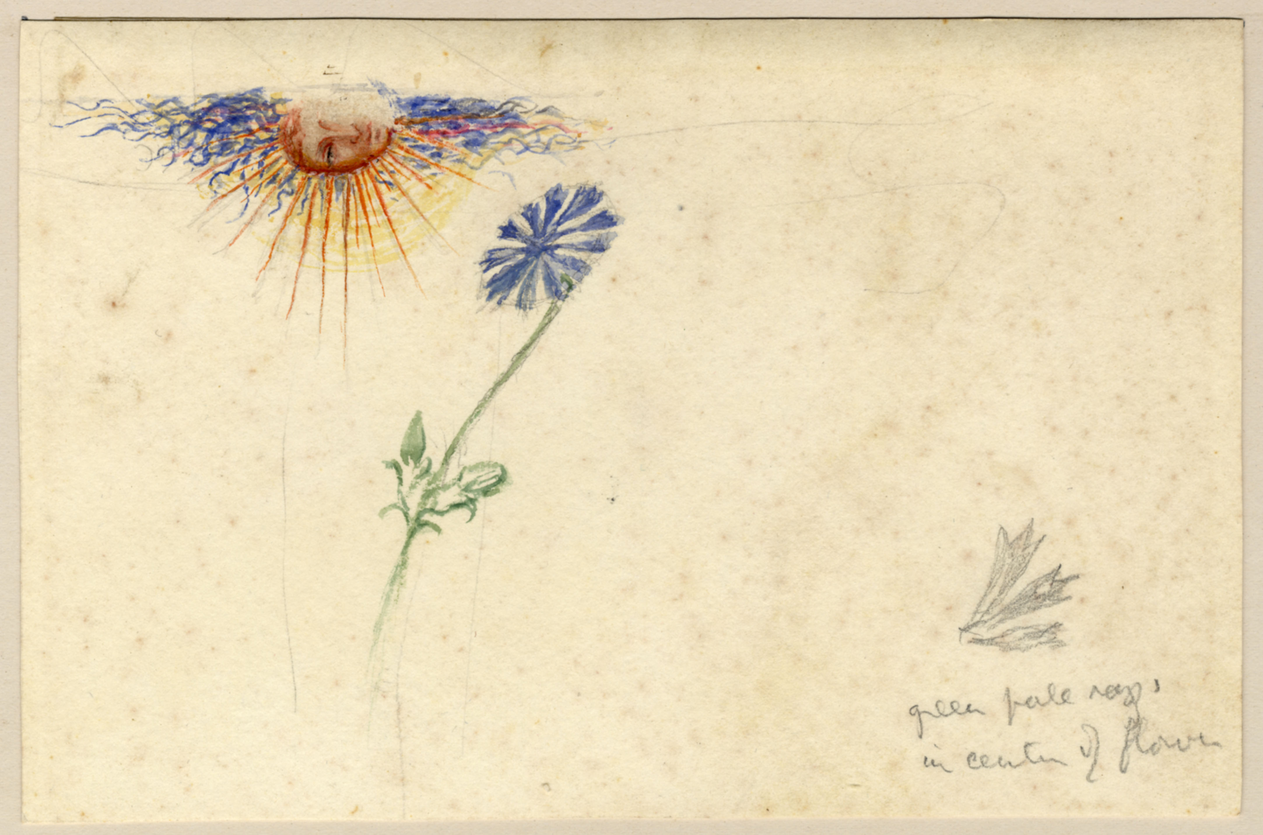 John Ruskin, Flower Study with elaborate drawing of Sun with Human Face, RF1268,  © Ruskin Foundation