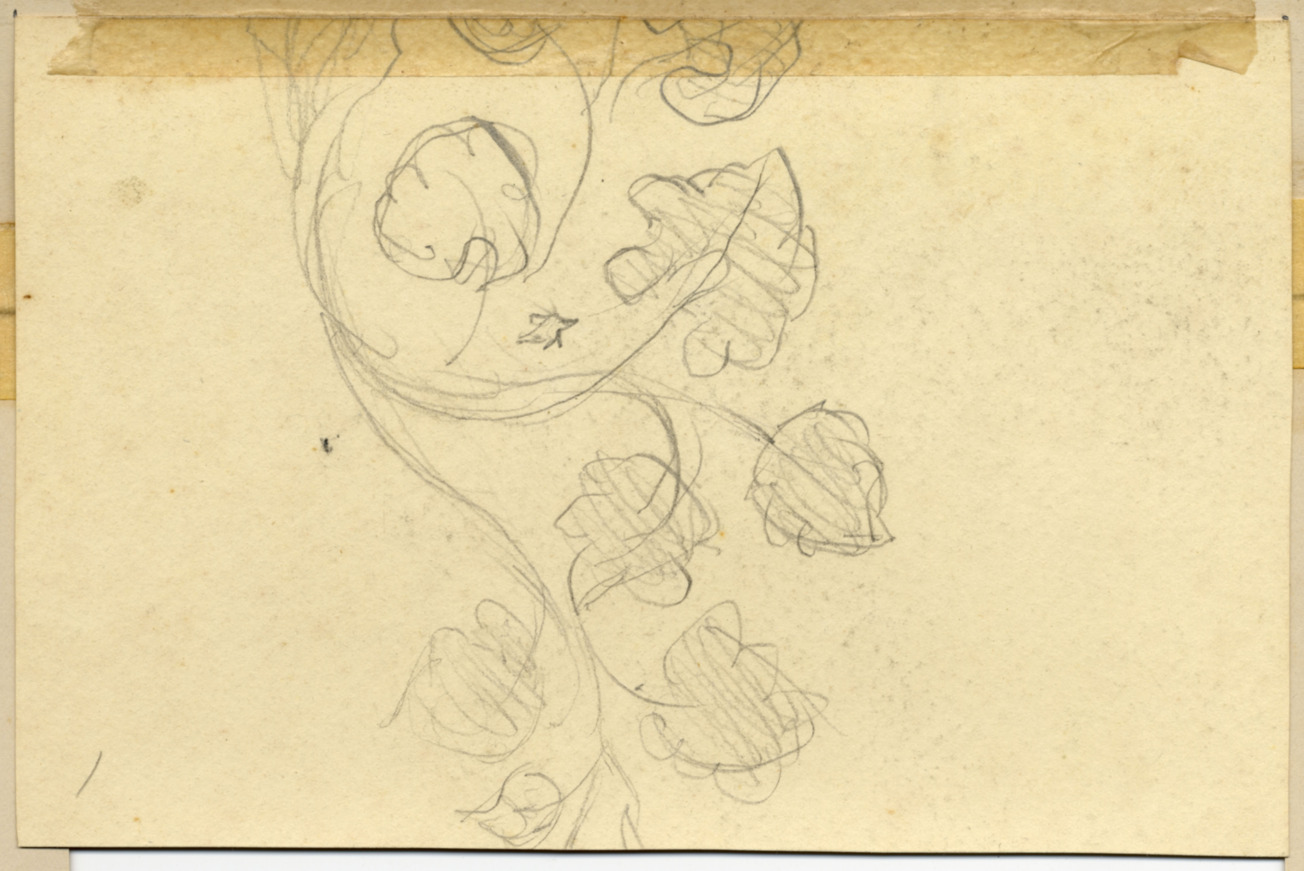 John Ruskin, Flower Study, RF1268v,  © Ruskin Foundation