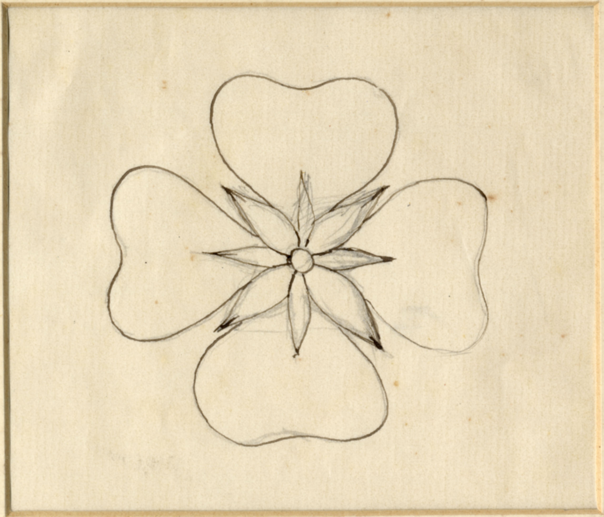 John Ruskin, Flower Study, RF1281 © Ruskin Foundation