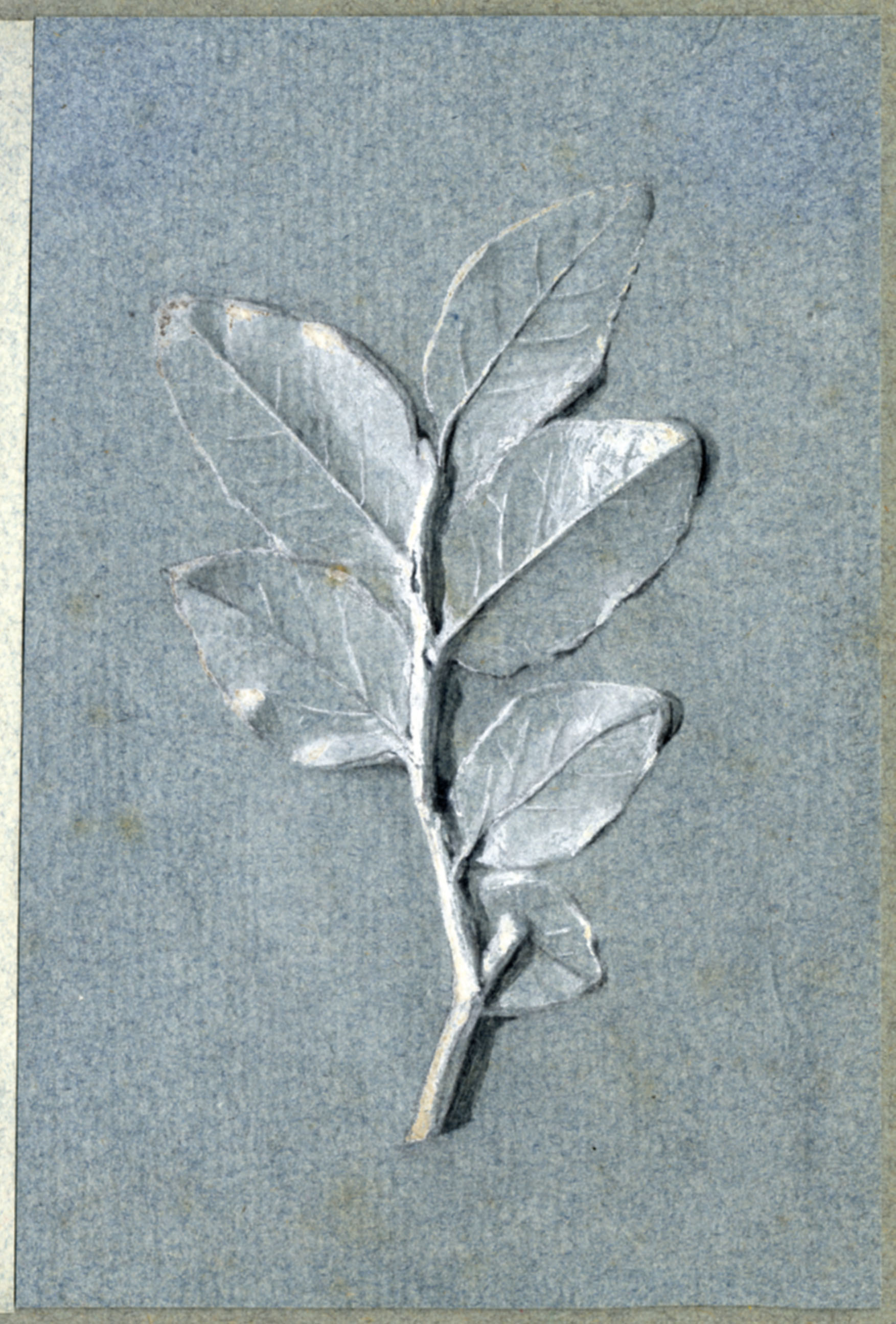 John Ruskin, Bay Leaves, RF1347-2 © Ruskin Foundation