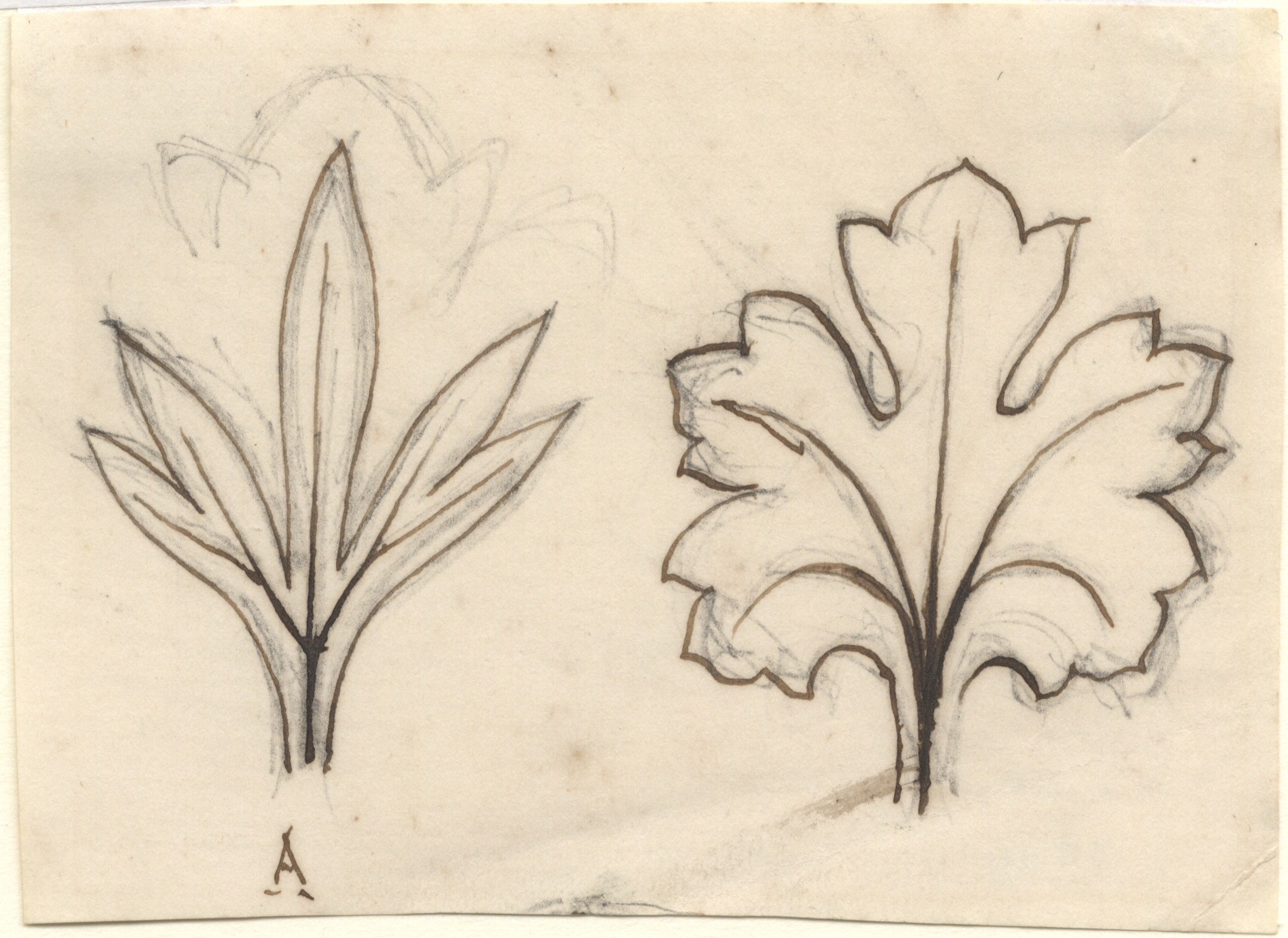 John Ruskin, Leaf Studies, RF1349 &copy; Ruskin Foundation