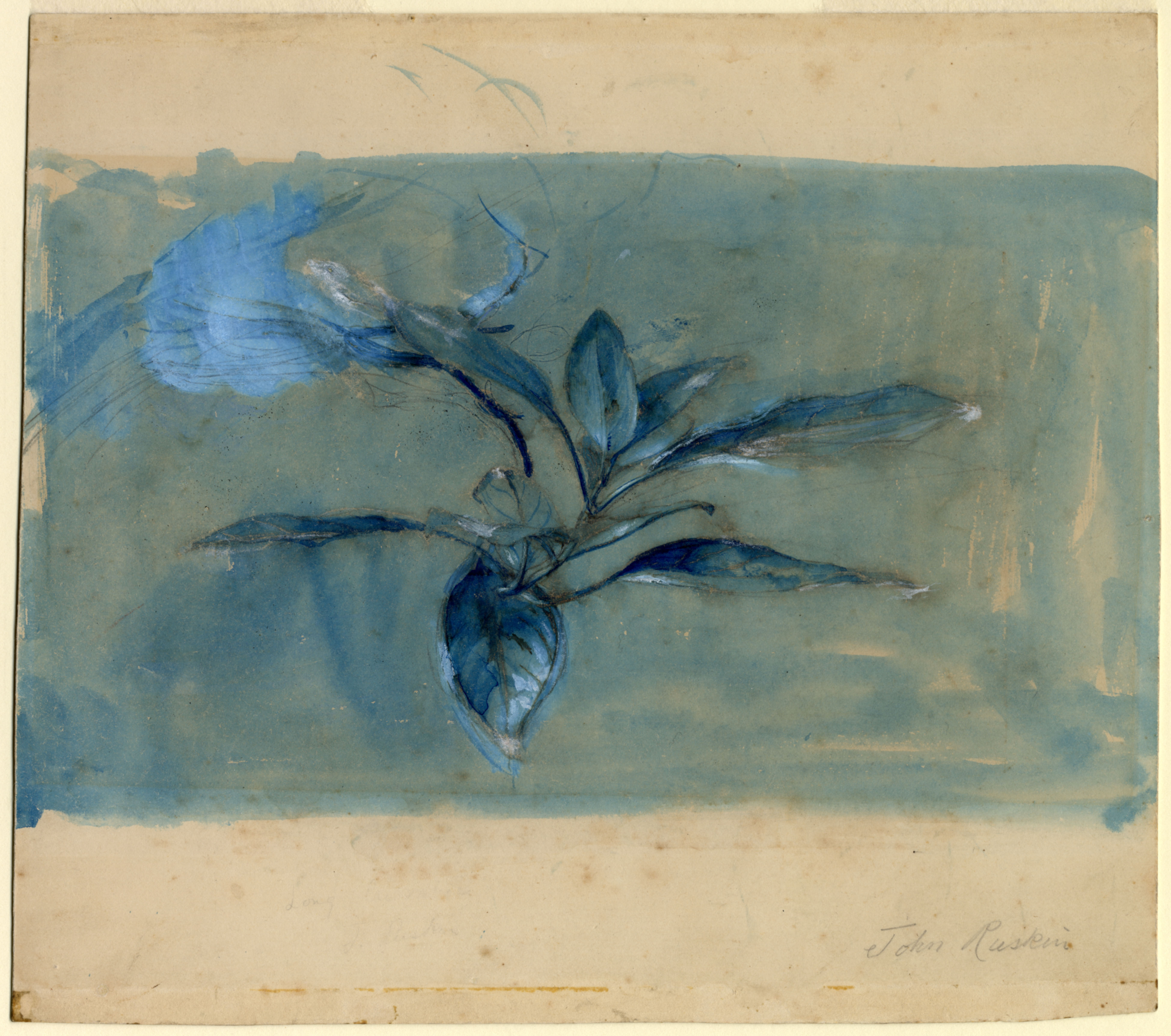 John Ruskin, Rhododendron Leaves  c.1854-58, RF1352 © Ruskin Foundation