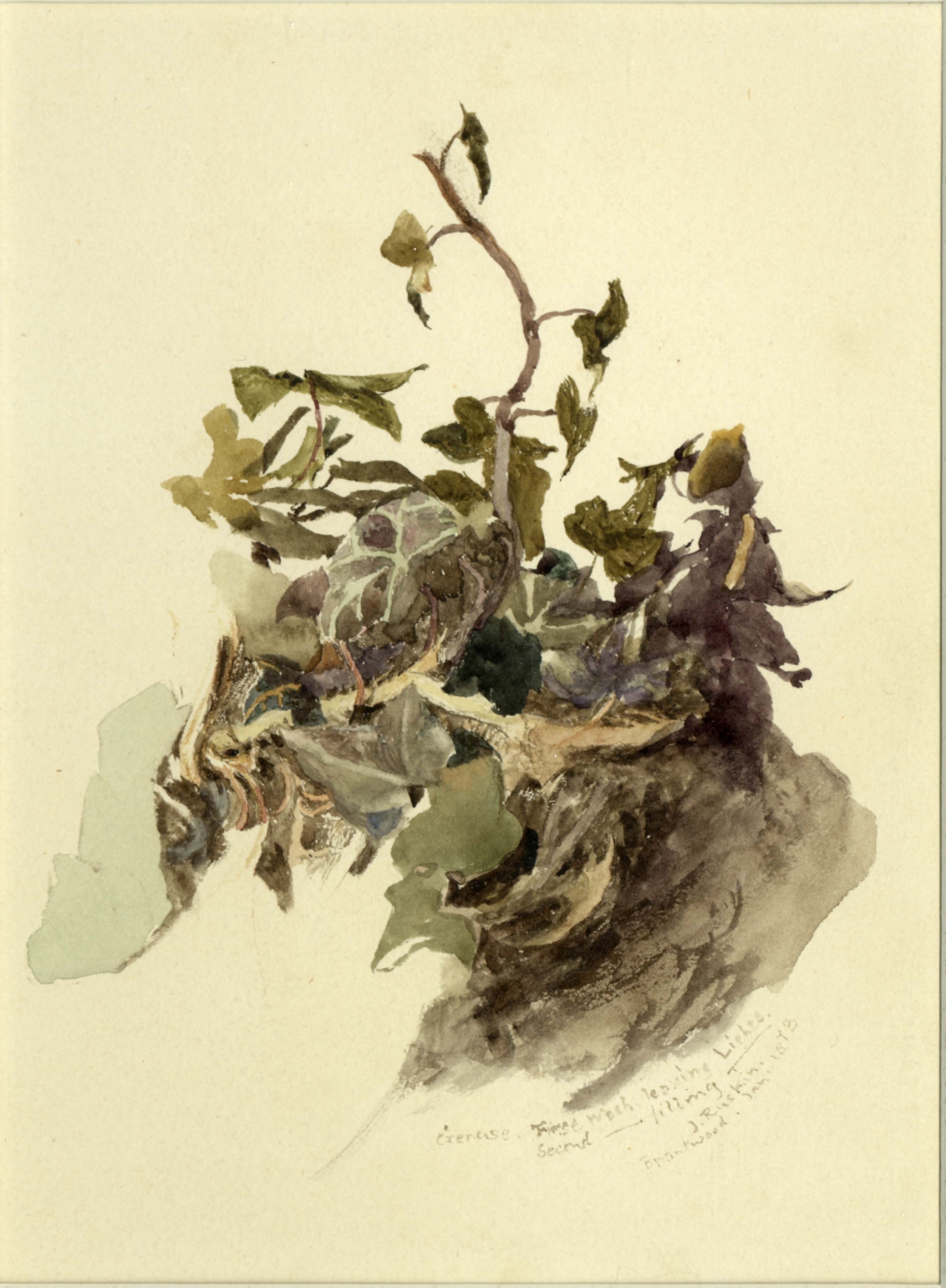 John Ruskin, Study of ivy, 1873(Jan), RF1354 &copy; Ruskin Foundation