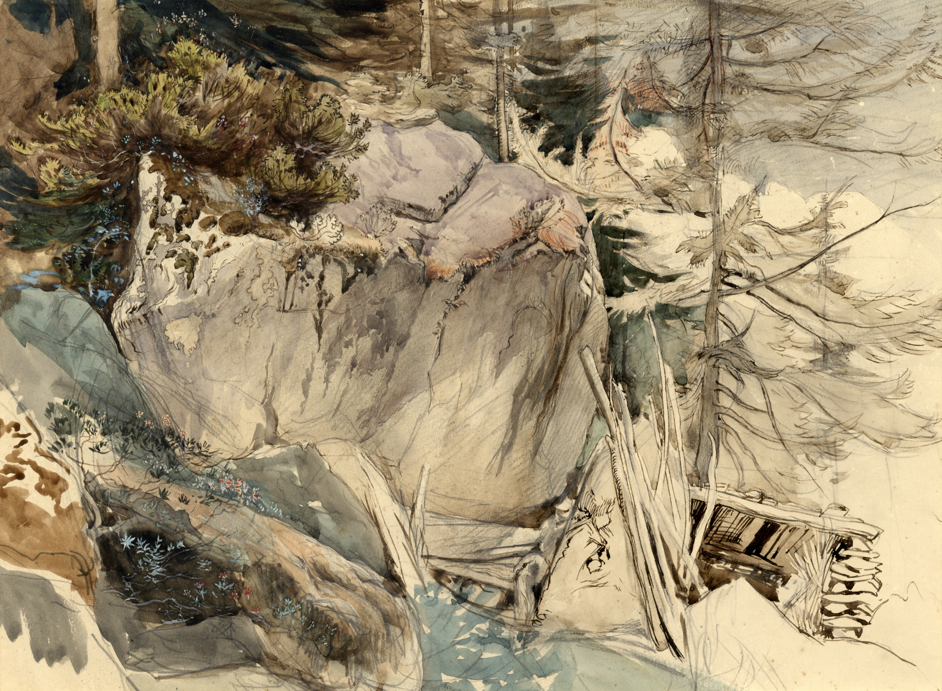 John Ruskin, Mountain Rock and Alpine Rose, 1844 (? or 1849), RF1395 © Ruskin Foundation