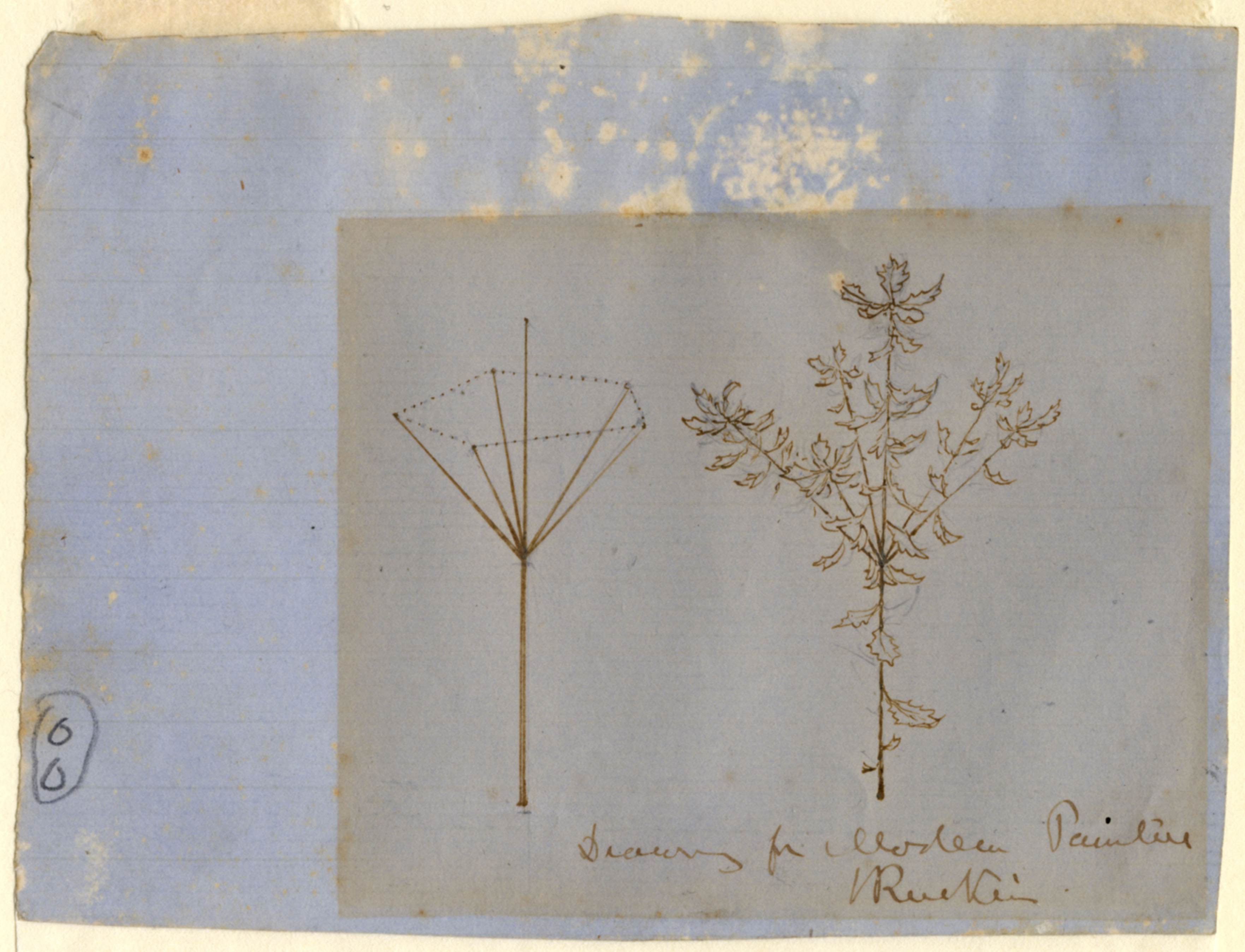 John Ruskin, Oak Stems, for Modern Painters  c.1860, RF1414 &copy; Ruskin Foundation