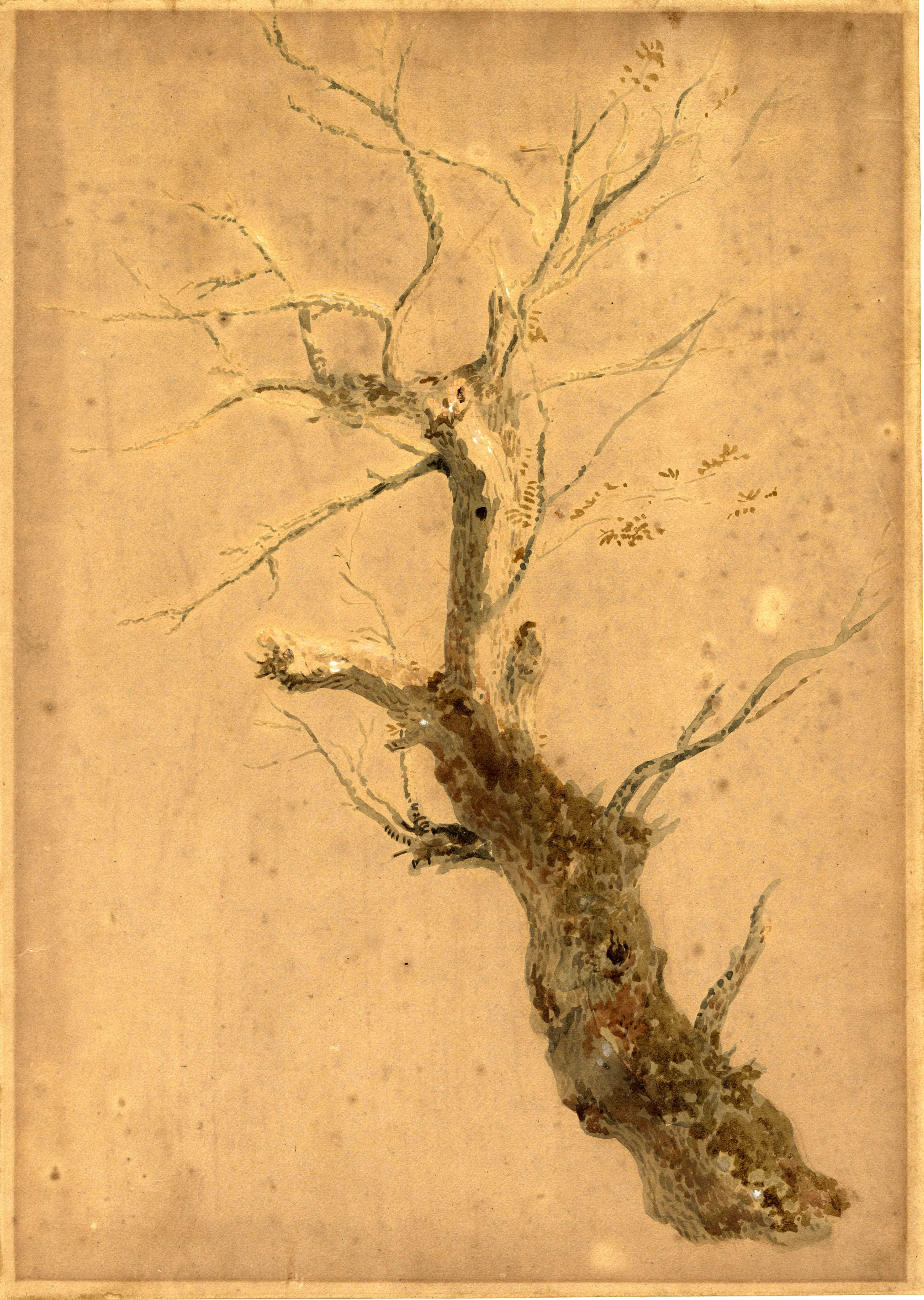 John Ruskin, Study of oak, RF1417 © Ruskin Foundation