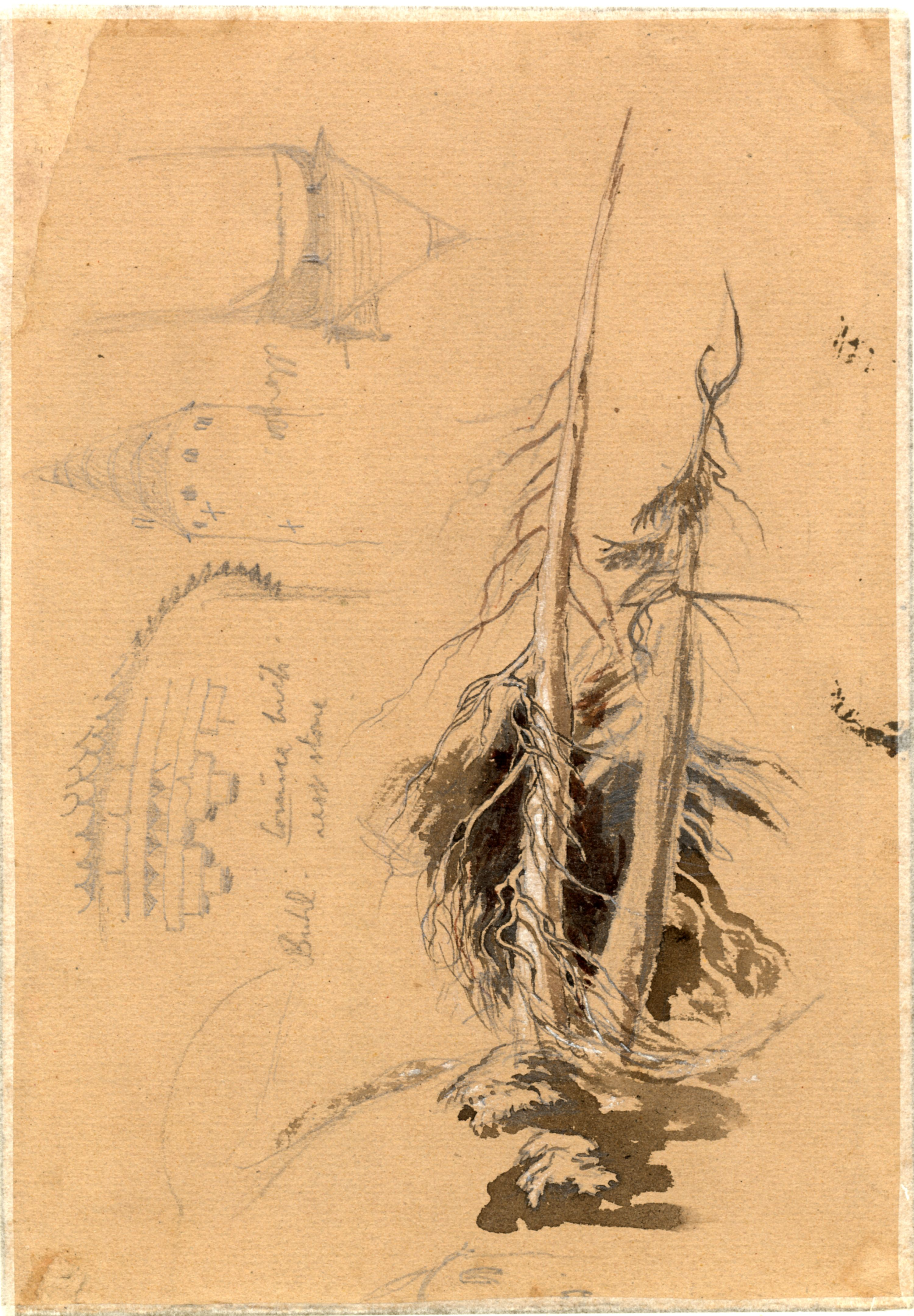 John Ruskin, studies of pine trees and towers, RF1438v © Ruskin Foundation
