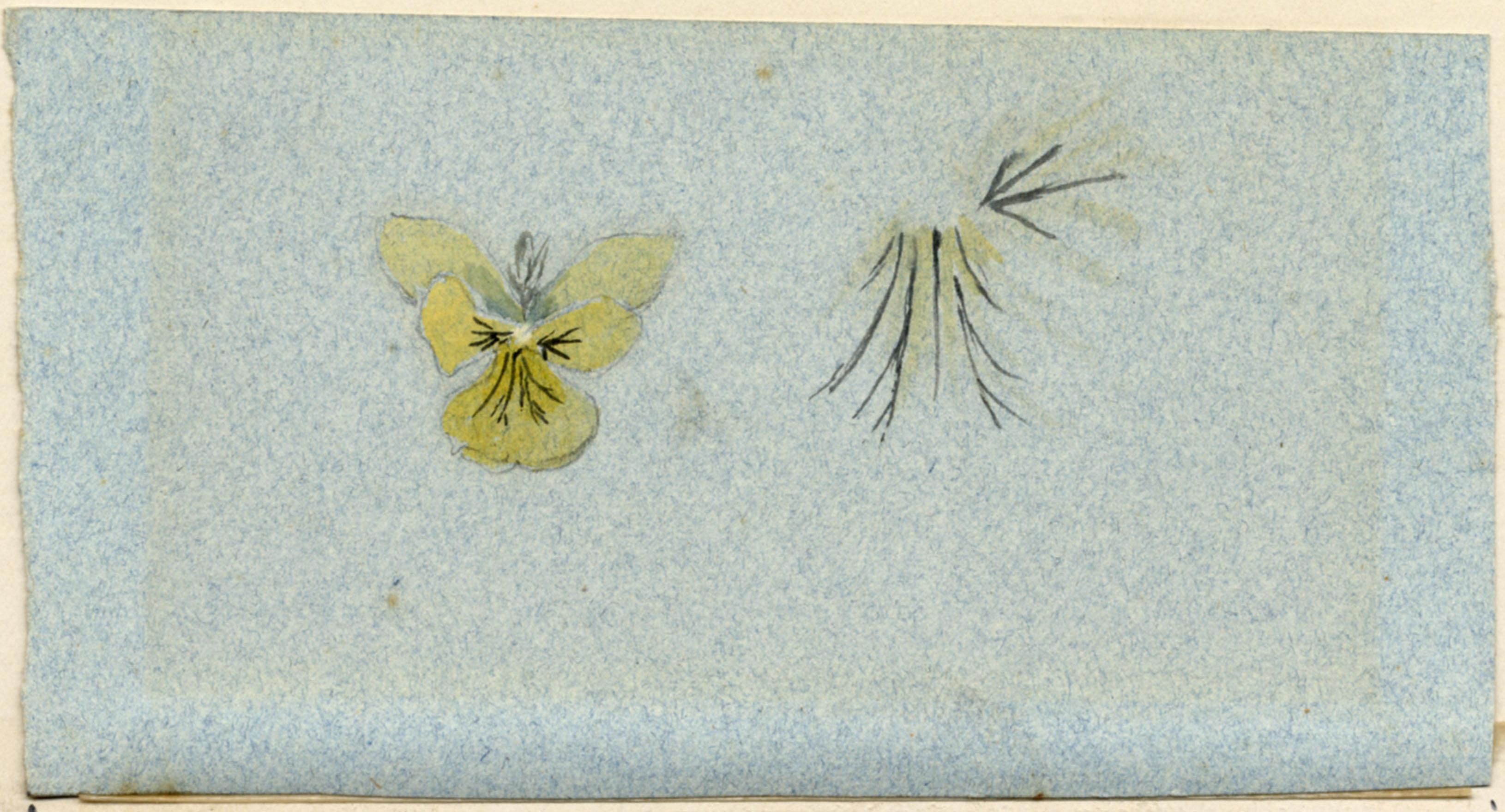 John Ruskin, Botanical Study, RF1446-2 © Ruskin Foundation