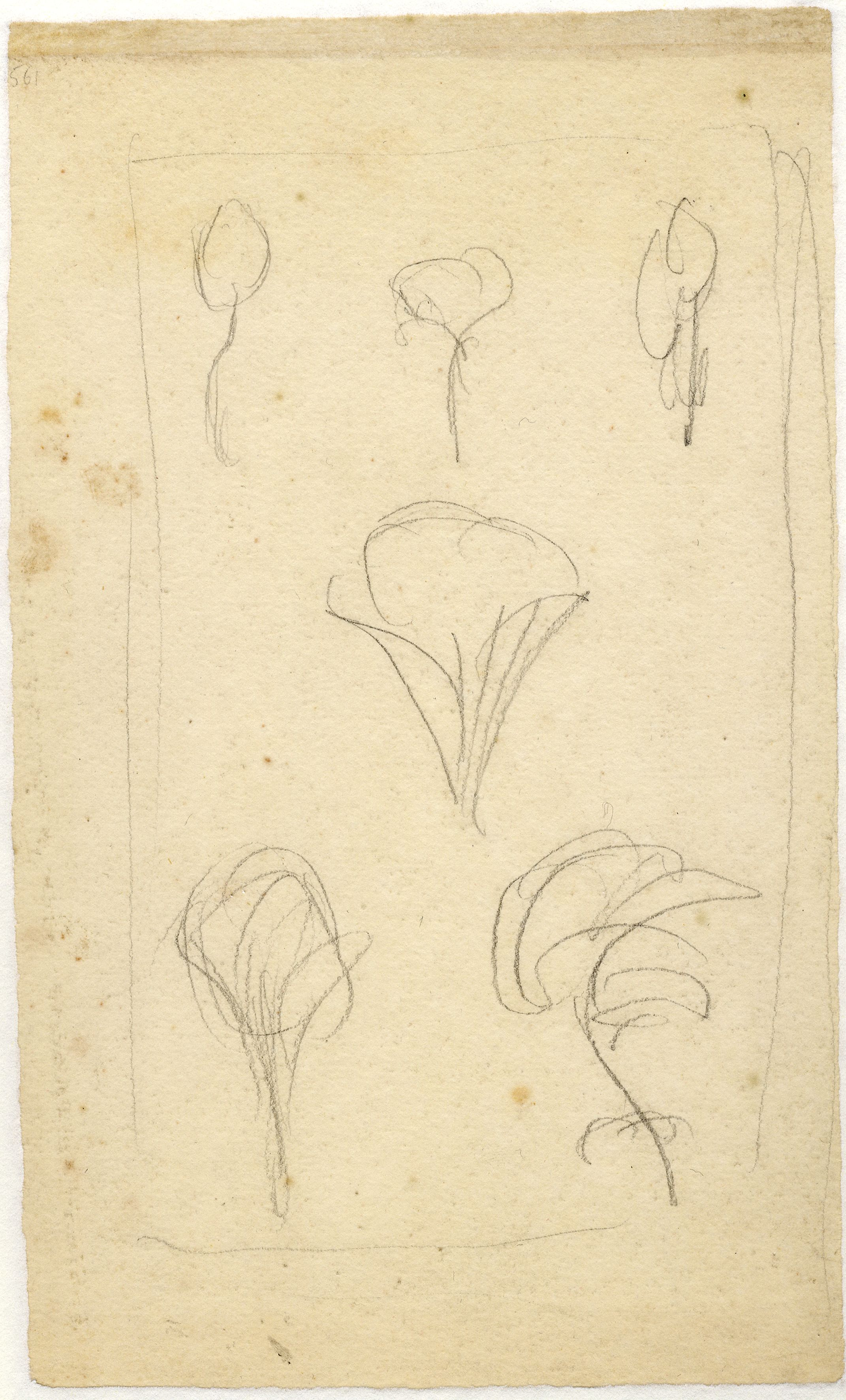 John Ruskin, The shape of trees as depicted by various artists, c 1855-56, RF1561v © Ruskin Foundation