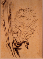 John Ruskin, Study of a Larch Bud, RF1265 © Ruskin Foundation