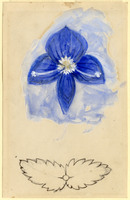 John Ruskin, Flower Studies, RF1273-1 © Ruskin Foundation