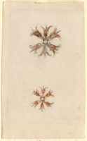John Ruskin, Flower Studies, RF1273-2 © Ruskin Foundation
