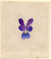 John Ruskin, Flower Studies, RF1273-3 © Ruskin Foundation