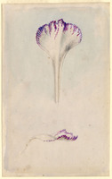 John Ruskin, Flower Studies, RF1273-4 © Ruskin Foundation