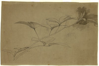 John Ruskin, Leaf Studies - Bramble. RF1344 © Ruskin Foundation