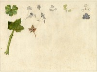 John Ruskin, Leaves, Miscellaneous Studies, RF1346 © Ruskin Foundation