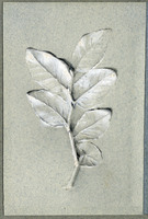 John Ruskin, Bay leaves: studies in light and shade RF1347-1 © Ruskin Foundation