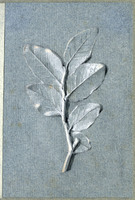 John Ruskin, Bay leaves: studies in light and shade, RF1347-2 © Ruskin Foundation