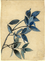 John Ruskin, Study of Leaves, RF1351 © Ruskin Foundation