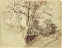 John Ruskin, Trees in a lane, perhaps at Ambleside 1847, RF1559 © Ruskin Foundation