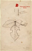 John Ruskin, Rose leaf cut by a bee, 1875-76, RF2003 © Ruskin Foundation