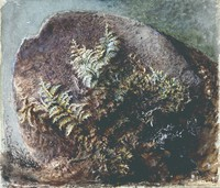 John Ruskin, Ferns on A Rock, 1875, RF2007 © Ruskin Foundation